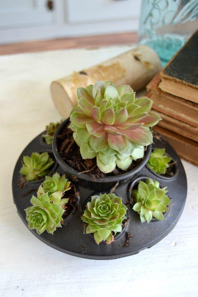 Succulents Planter