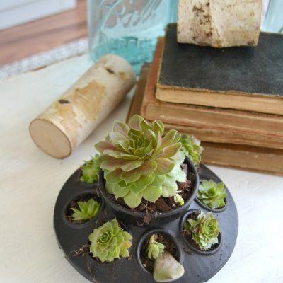 DIY Succulents Planter {DIY in 30}